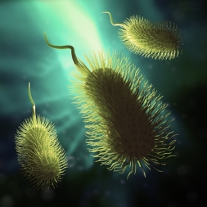 Scientific illustration of a bacteria - 3d rendered image