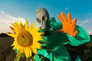 Man in a respirator on sunflower field